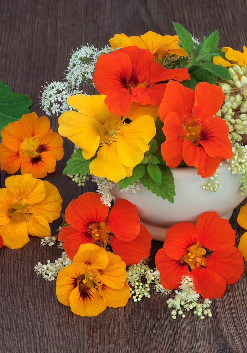 Healing flowers and herbs used in natural alternative medicine with nasturtium, queen annes lace, meadowsweet, mint and angelica seed heads with essential oil bottles and mortar with pestle.